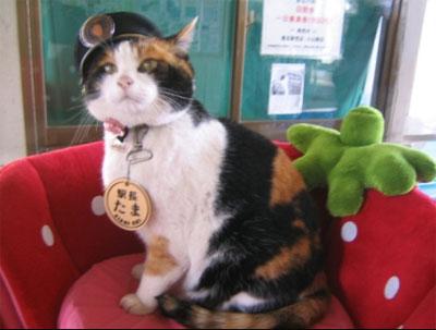 ทามะ แมวเหมียวนายสถานีรถไฟ