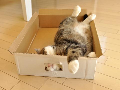 มารุ แมวกล่อง