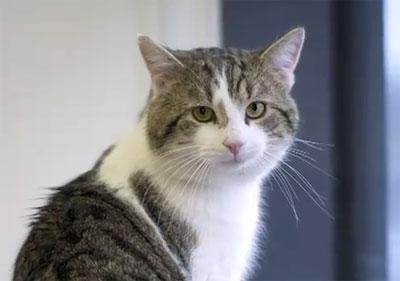 แลร์รี่ ทับบี้ แมวหมายเลข 1 แห่งอังกฤษ